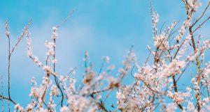 Hooikoorts en acupunctuur
